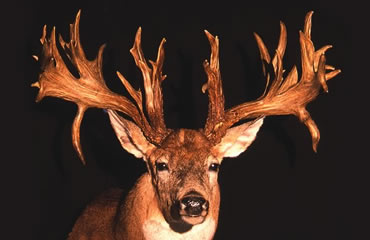 2001: The Mike Beatty Buck