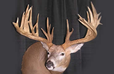 2009 Cowinner: The Kyle Simmons Buck