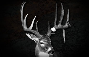 Cole Foglesong Buck