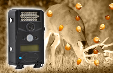 Trail Cam Tip: Don't Just Pile It On