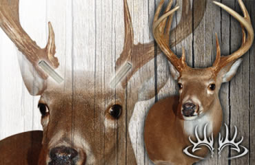 Second Chance Deer Mounts