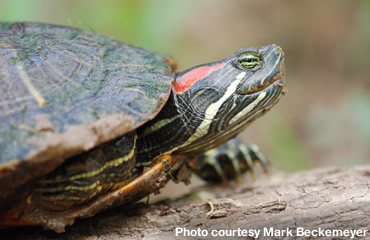 Turtles—Give 'em a brake