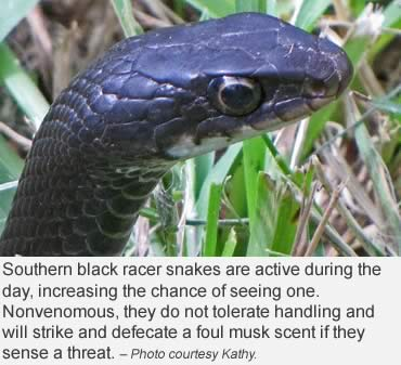 Ssssnake advice? Just leave them alone
