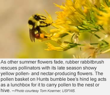 Yes, that's right, bumble bees hibernate