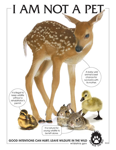 Know the facts about orphaned and injured wildlife